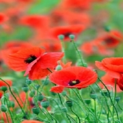 قیمت بذر گل و گیاهان زینتی