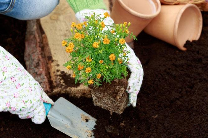 آموزش کاشت بذر گل