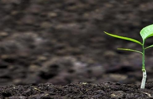 بذر هیبرید سبزیجات