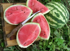 بذر هندوانه کریمسون سوپر سوییت 100 گرمی