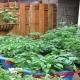 خرید اینترنتی بذر سبزیجات ارگانیک