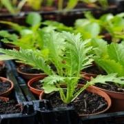 چگونه بذر سبزیجات را بکاریم
