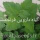 آموزش کاشت گیاه دارویی فرنجمشک