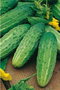 بذر خیار خاردار 25 گرمی