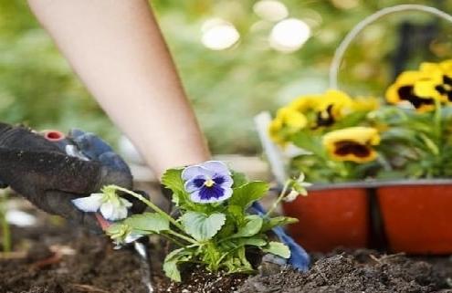 آموزش کاشت گل برای عید نوروز