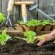 کاشت بذر سبزیجات در خانه