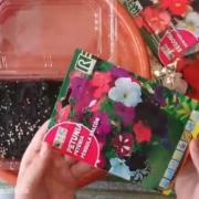 آموزش کاشت بذر گل اطلسی بالکنی