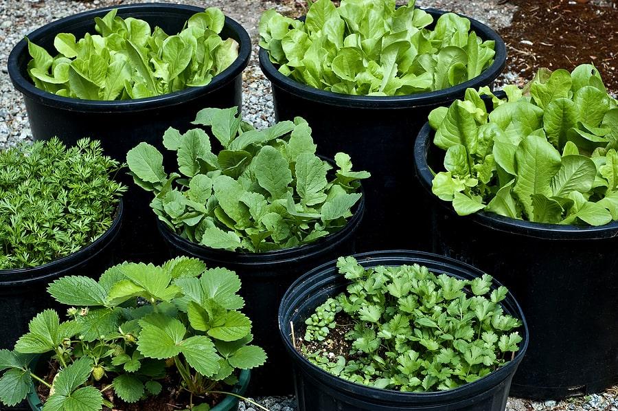 آموزش کاشت بذر سبزیجات در خانه