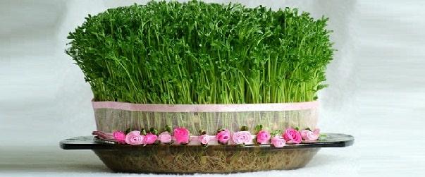 بهترین زمان برای سبزه عید عدس