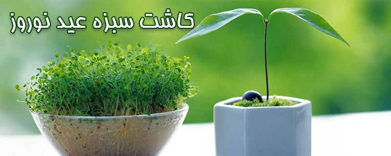 آموزش کاشت سبزه عید