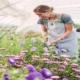 خرید اینترنتی بذر گل های زینتی