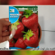آموزش کاشت بذر توت فرنگی