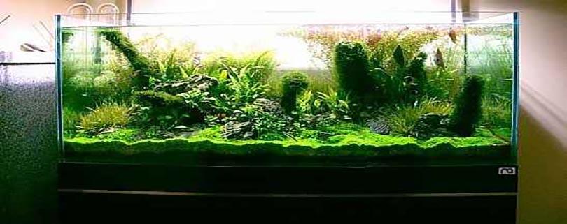 معرفی چند گونه گیاه آکواریومی