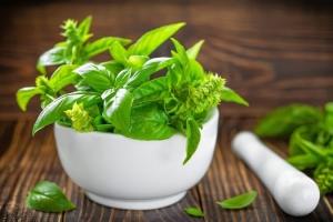 معرفی و روش کاشت گیاه ریحان