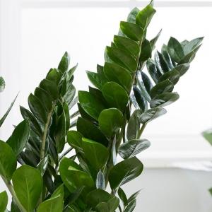 معرفی چند گیاه آپارتمانی