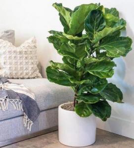 20 گیاه زینتی همیشه سبز در خانه