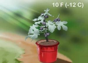 دمای مناسب برای کاشت درخت انجیر