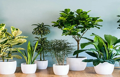 تنظیم نور مناسب گیاهان
