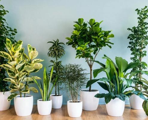 نور مناسب گیاهان