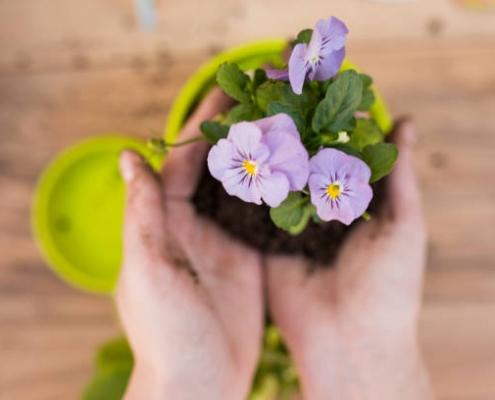 انتقال گل ها به گلدان جدید