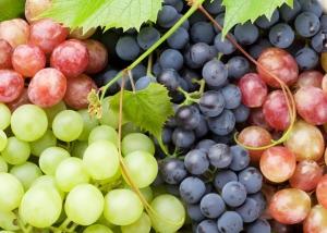 روش صحیح کاشت و نگهداری درخت انگور