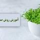 کاشت بذر شاهی