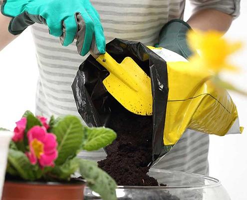 کود شیمیایی گیاهان آپارتمانی