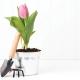 کاشت پیاز گل لاله