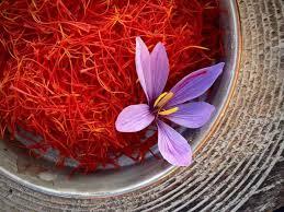کاشت پیاز زعفران