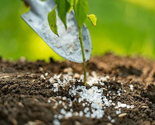 کود دانه ای گیاهان آپارتمانی