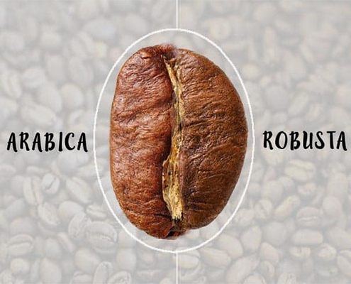 تفاوت قهوه عربیکا و روبوستا
