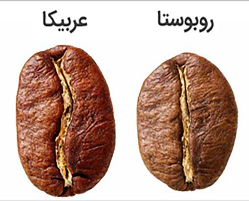 تفاوت ظاهری قهوه عربیکا و روبوستا