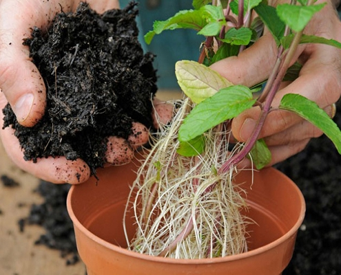 خاک مناسب برای کاشت نعناع در گلدان