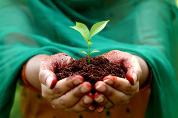کاشت گیاه حنا