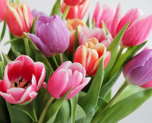 گل بهاری آپارتمانی لاله