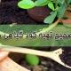 تهیه کود خانگی برای گیاهان