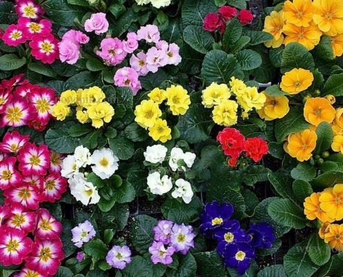 گلهای بهاری باغچه ای