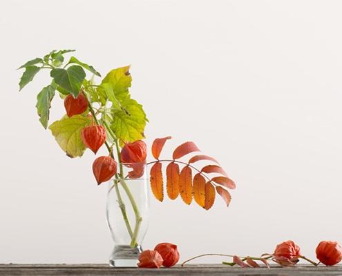 گیاه عروس پشت پرده