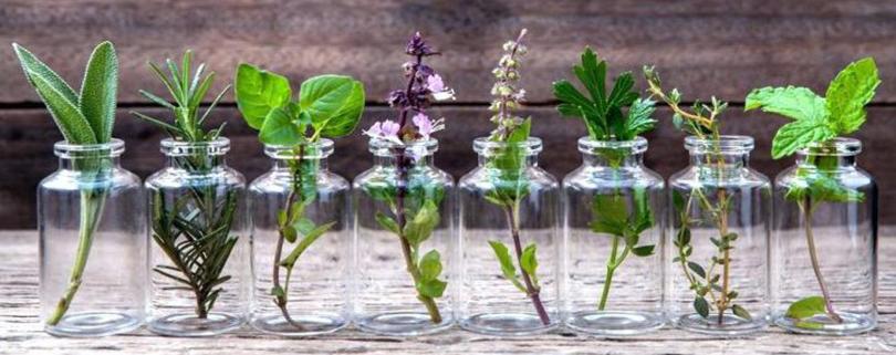 پرورش گیاهان دارویی