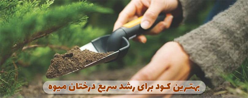 بهترین کود برای رشد درختان میوه