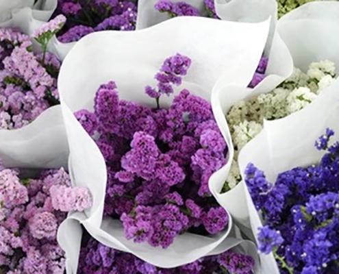 کاشت و نگهداری گل لیمونیوم