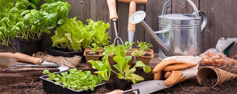 خاک مناسب سبزی کاری