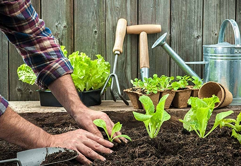 خاک مخصوص سبزی کاری چه ویژگی دارد؟
