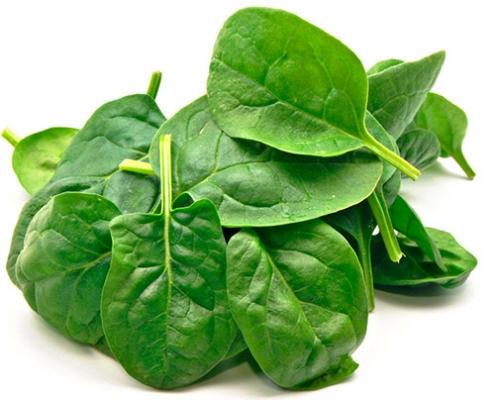 سبزی اسفناج مناسب برای کاشت در پاییز